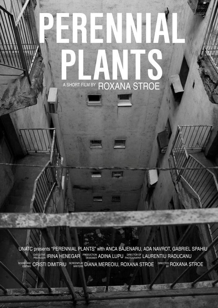 Plante perene (2013) - Photo