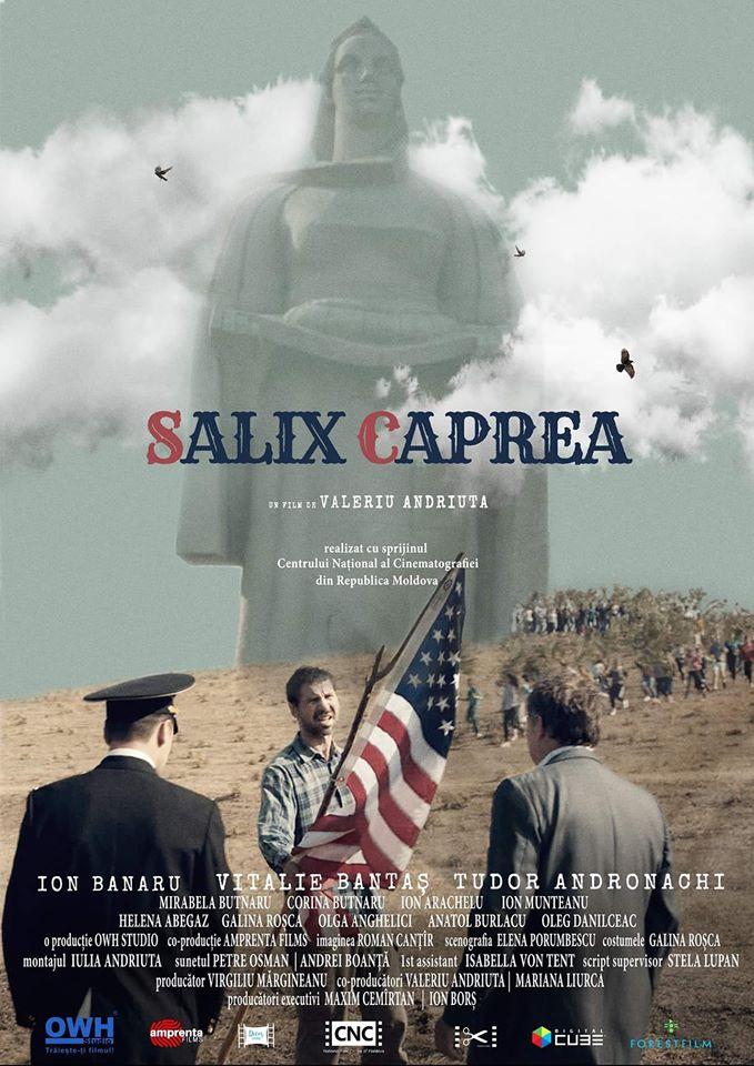 Salix Caprea (2018) - Photo