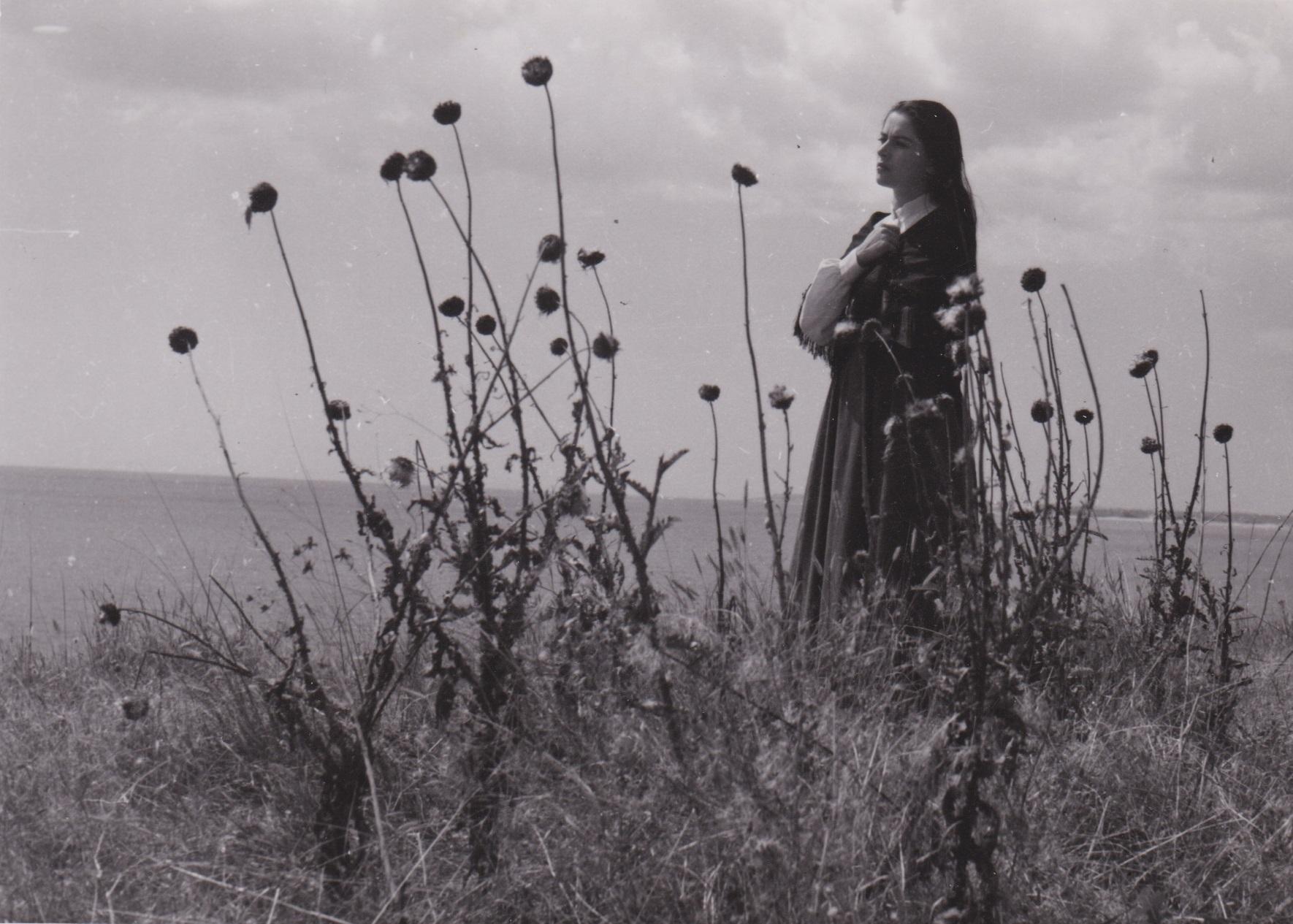 The Baragan Thistles (1957) - Photo